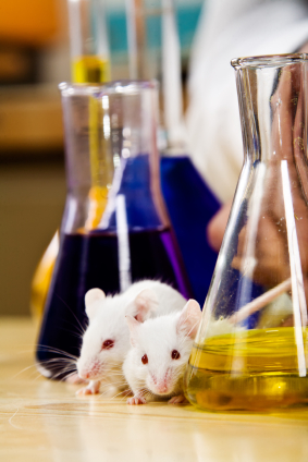 Experiment lab mice