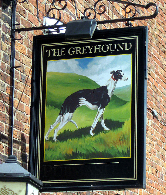 Where did the greyhound come from?