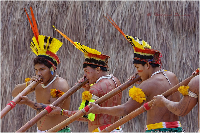 Kuriko Indians (Brazil) play Taquara Flutes. Dance, music, and ceremony are often interlinked in Indigenous cultures. Photo: Wilfred Paulse / Flickr.