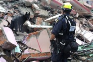 USAID_DART_Searches_Collapsed_Structure_in_Bhaktapur,_Nepal_(17106163997)